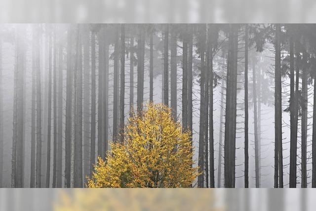 Forstbetriebsgemeinschaft Kirchzarten befasst sich mit dem Kartell