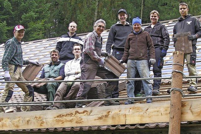 Eine Marderfamilie wohnt im Schützenhausdach