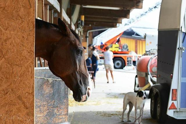 Praktikum auf Pferdehof endet in Psychiatrie