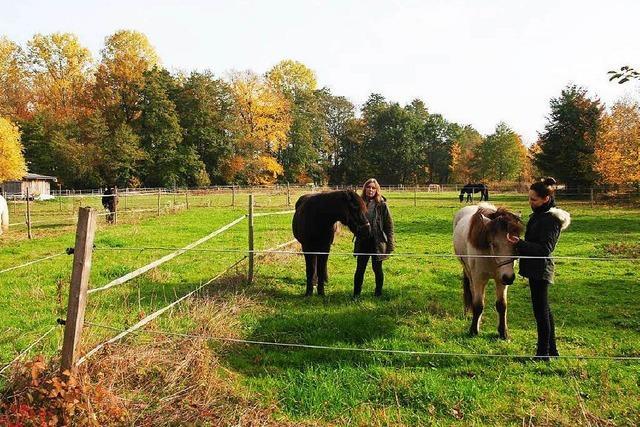 Asylcontainer auf Pferdeweide: Hofbetreiber fühlen sich übergangen