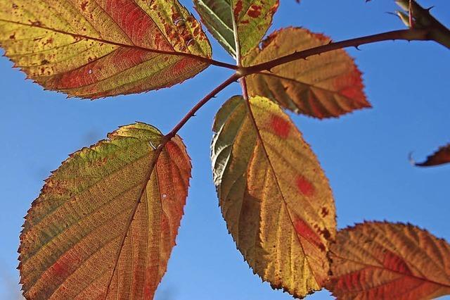 Ein Herbst