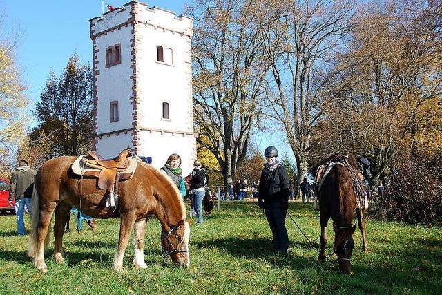 Mit Pferdestärke durch die Landschaft