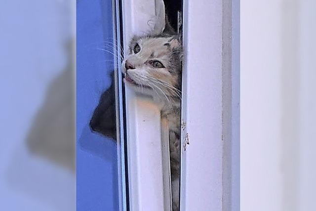 Feuerwehr rettet Katze aus der Todesfalle