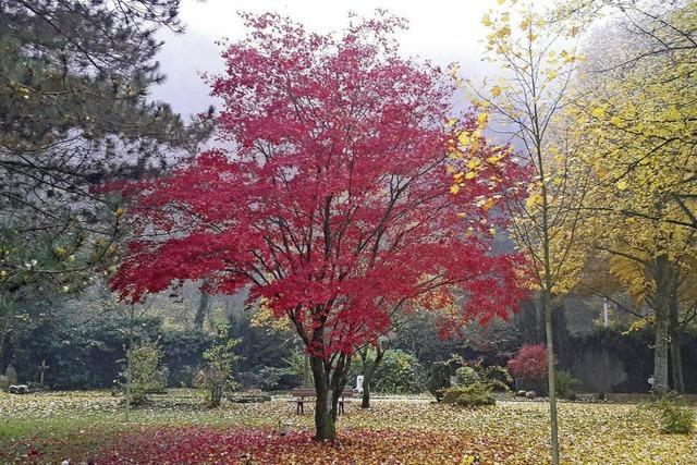 Der Herbst Malt mit