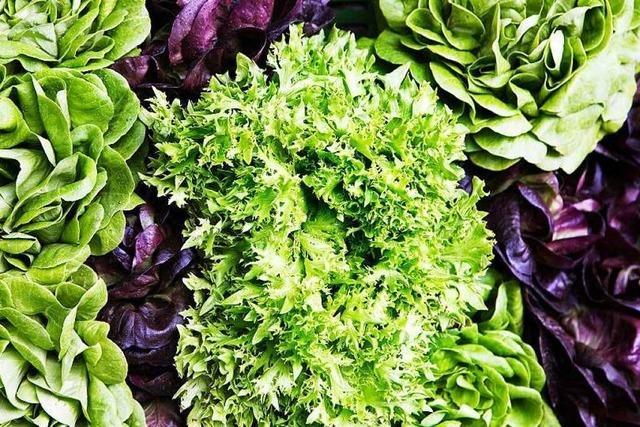 Wie schnell kommt der Salat vom Feld in den Supermarkt?