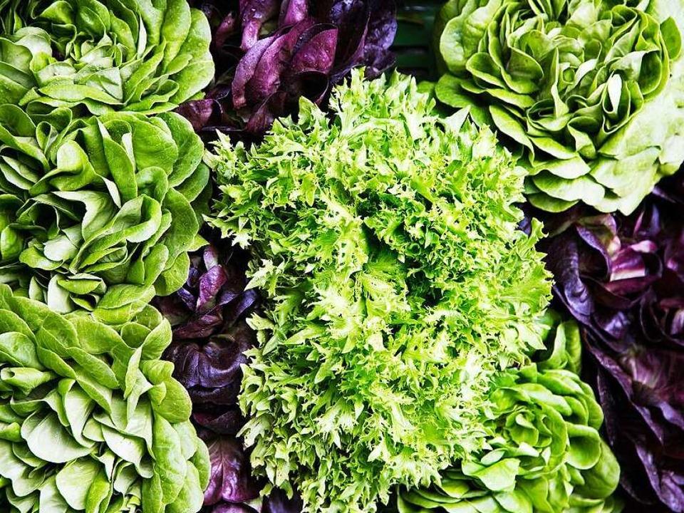 Knackfrisches Grün: Salatköpfe  direkt nach der Ernte  | Foto: Michael Wissing