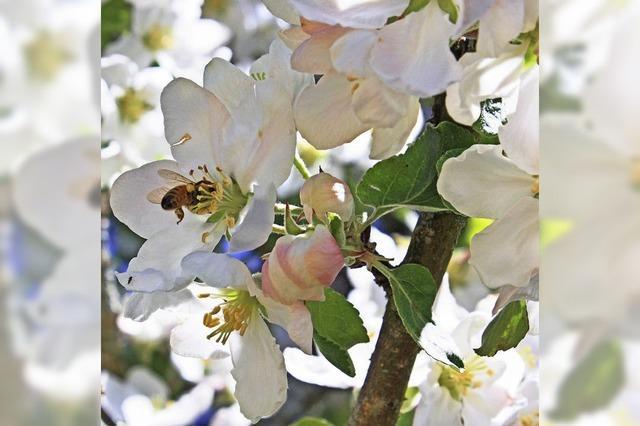 Einsatz für Obst und Bienen