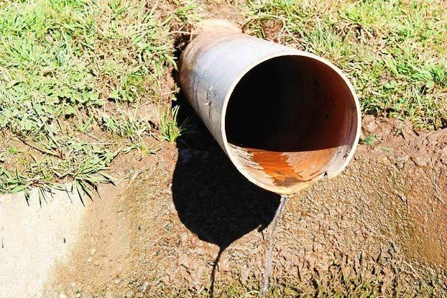 Hofquellen führen zu wenig Wasser – Schwarzwälder Landwirte leiden