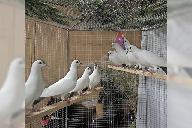 Tauben, Hühner und Enten in der Festhalle