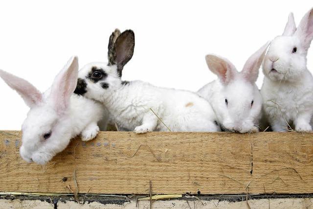 Wie ein Graf in Thüringen zu tausend Kaninchen kam