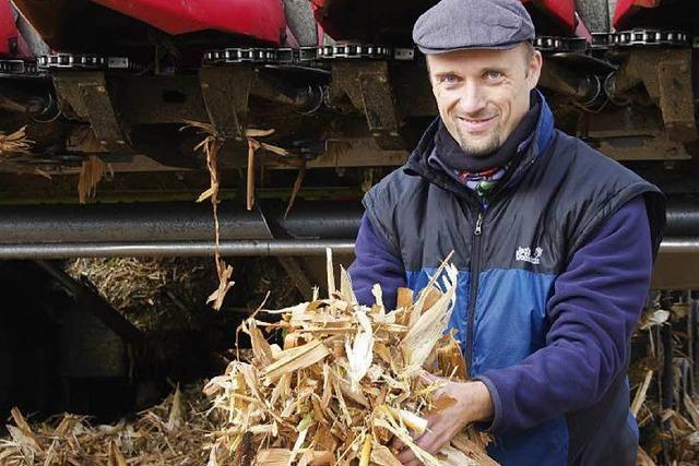 Kann Maisstroh in Biogasanlagen zu Energie zu verarbeitet werden?