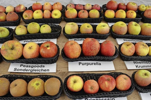 Alte Apfelsorten sind wieder interessant