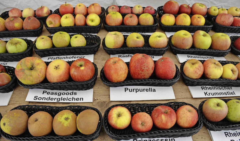 Apfelsorten-Ausstellung in Staufen  | Foto: Gabriele Hennicke