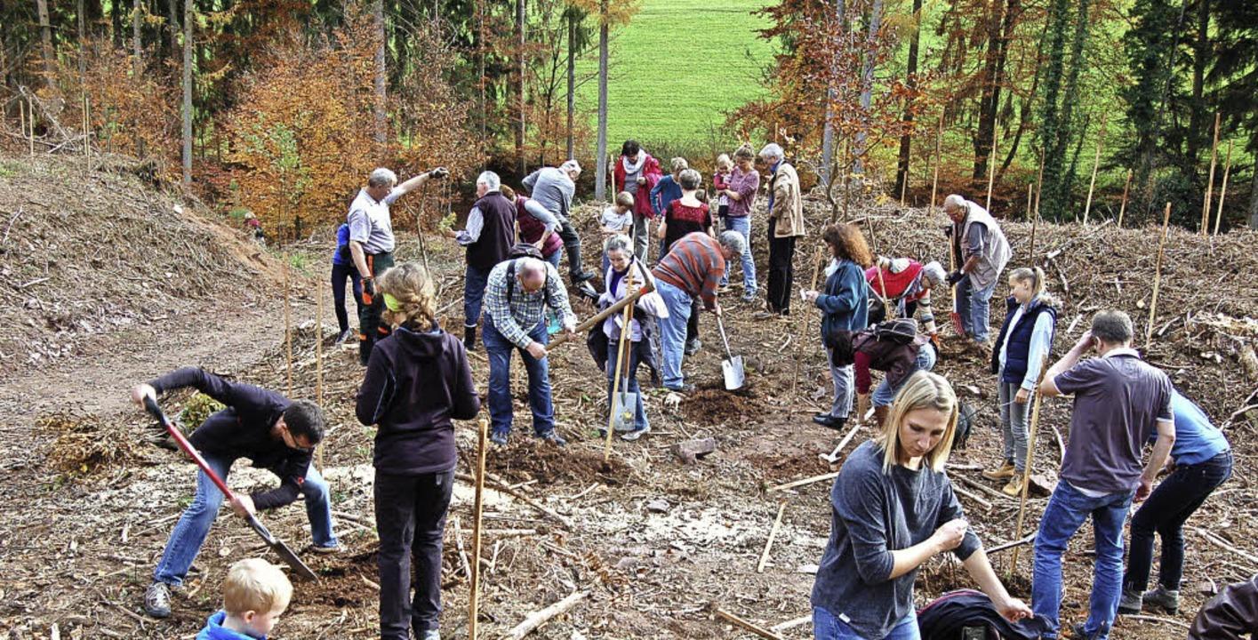 Graben in felsigem Untergrund: Die 100 Baumpaten hatten keinen leichten Job.   | Foto: Christian Ringwald