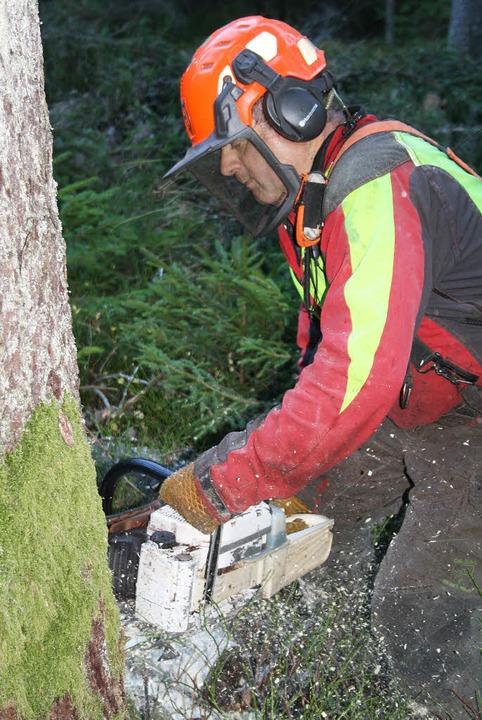Waldarbeiter haben in diesem Jahr 72 P...enge im Löffinger Stadtwald geerntet.   | Foto: Karl Meister