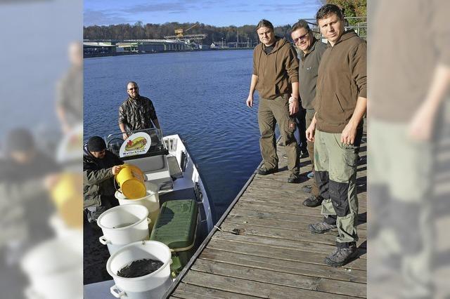 Die Fischer schenken dem Rhein 1300 neue Bewohner