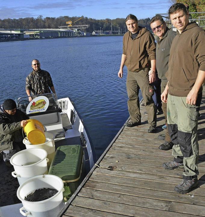 Die Mitglieder des Fischereivereins  s...chleien und Wildkarpfen im Rhein aus.   | Foto: Heinz Vollmar