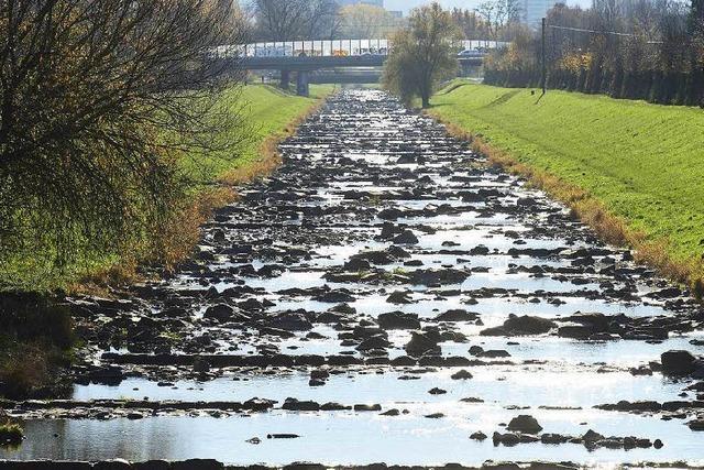 Trockenheit in Freiburg: Dreisam-Pegel fällt auf 17 Zentimeter