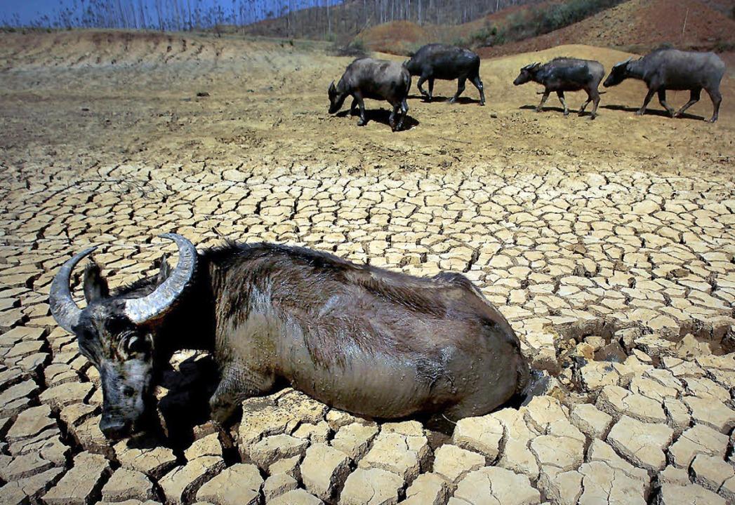 Dieses Bild stammt nicht aus Afrika, s...malen Jahren ist es hier saftig grün.     Foto: AFP