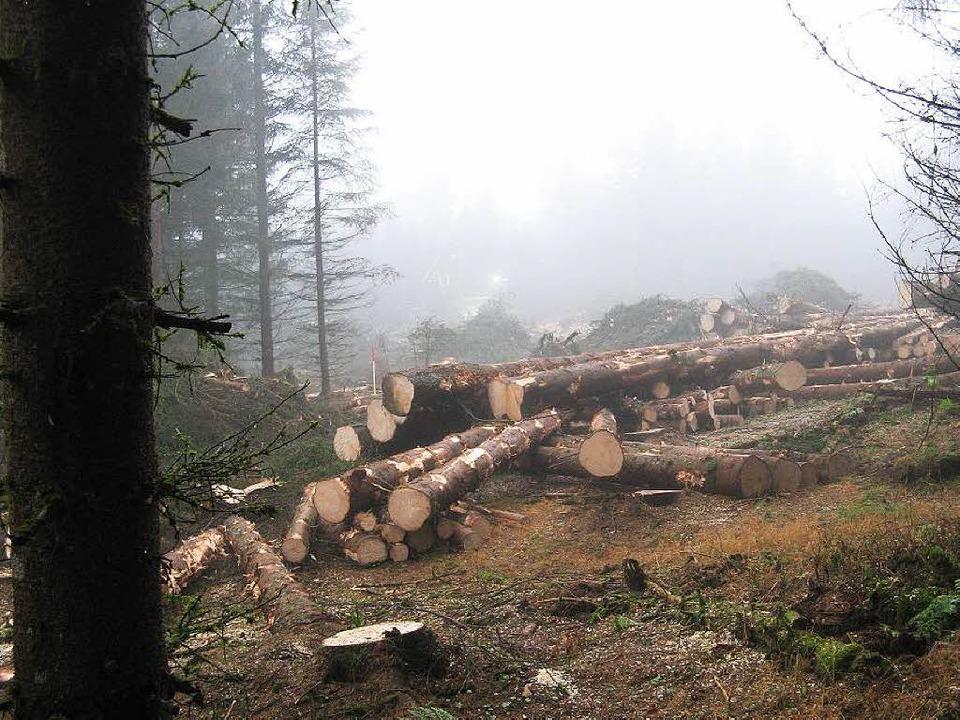 Holzhiebe  sind auf dem Rohrenkopf ber...tscheiden, ob diese gestoppt werden.    | Foto: privat