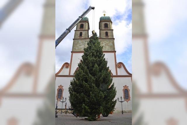 Weihnachtsbaum aus der Fremde