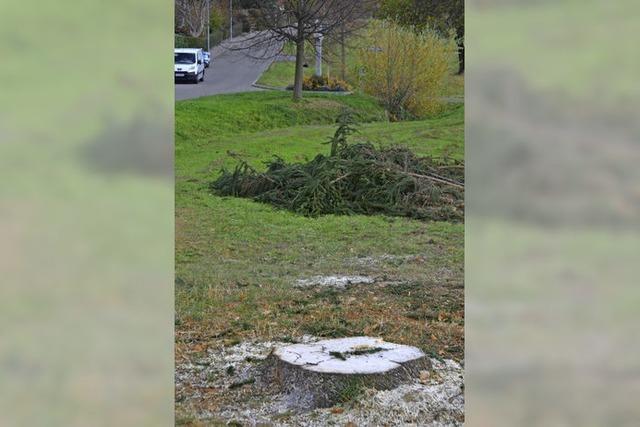 Baumfällung in Stetten Süd: Baum und Heimat