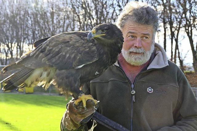 Majestätische Adler und faszinierende Falken