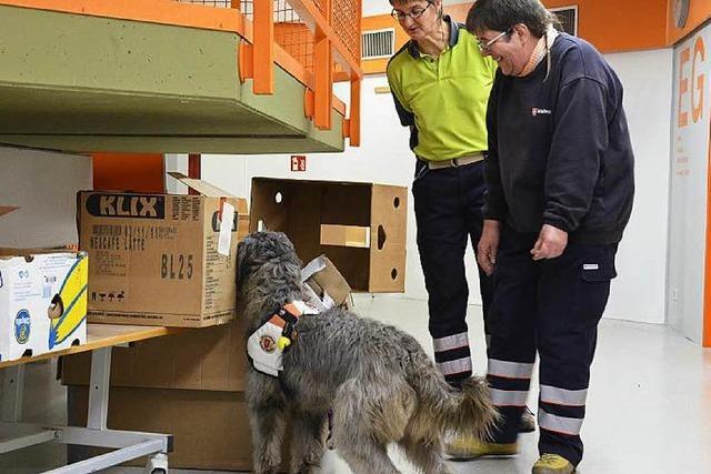 Wenn Hunde die Schulbank drücken: Rettungshunde der Malteser probt in Schule in Bad Säckingen