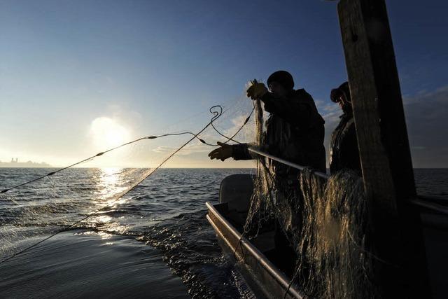 Bodensee-Fischer rechnen mit noch weniger Fängen