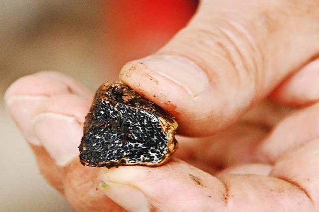 Forscher setzen sich für Trüffelsuche am Kaiserstuhl ein