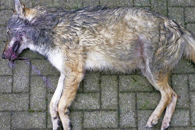 Weiterer Wolf entdeckt
