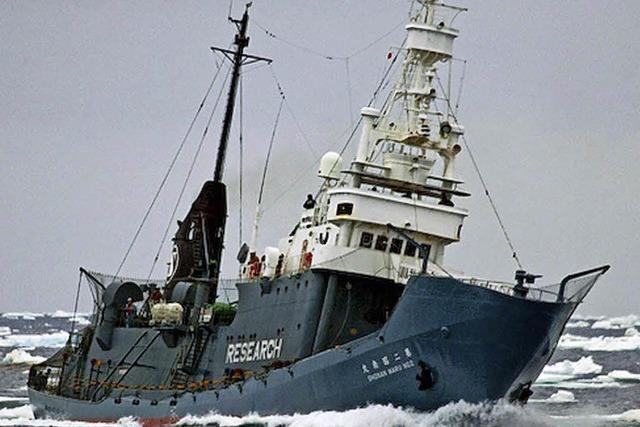 Japaner wieder auf Walfang