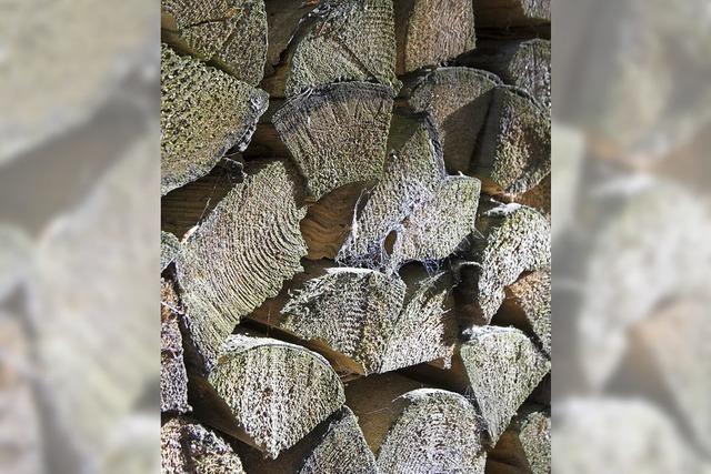 Trockenheit macht Wäldern zu schaffen