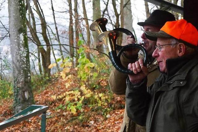 Treibjagd im Schwarzwald: Das Ende von vier Wildschweinen