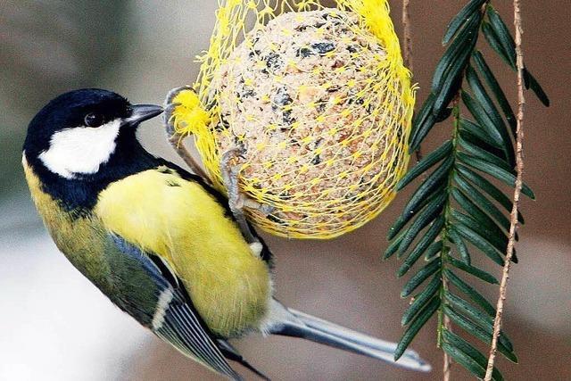 Ornithologe zur Frage: Soll man Vögel im Winter füttern?