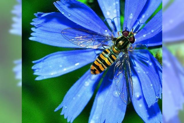 Die fleißige Biene ist in guter Gesellschaft