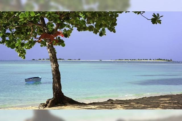 Grenada ist in der Adventszeit: Auf die Nuss