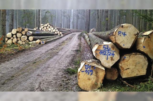 Wald bleibt sichere Einnahmequelle