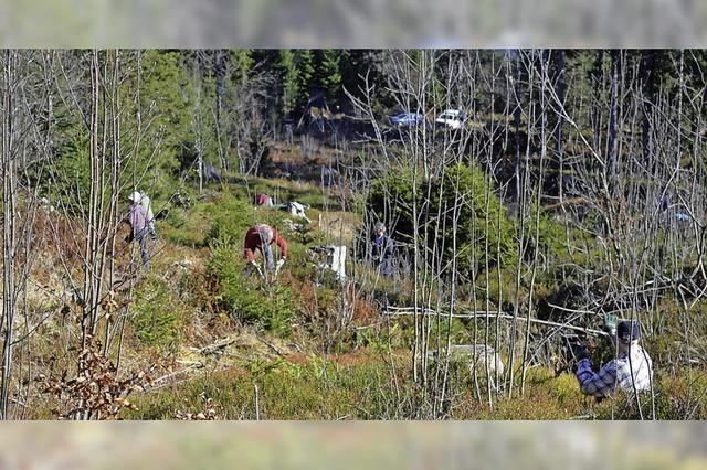 Mountainbiker pflegen Balzplatz für das Auerhuhn