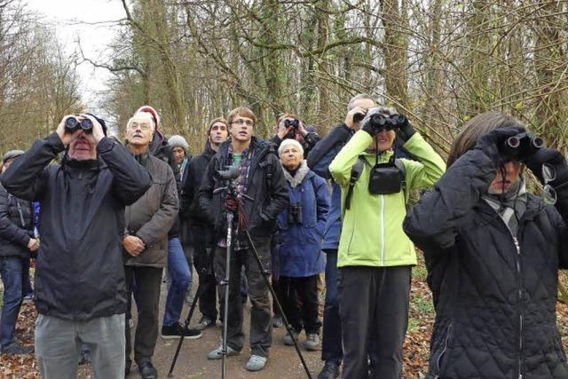 Nach gelungener Premiere plant Naturschutzbund weitere vogelkundliche Exkursionen