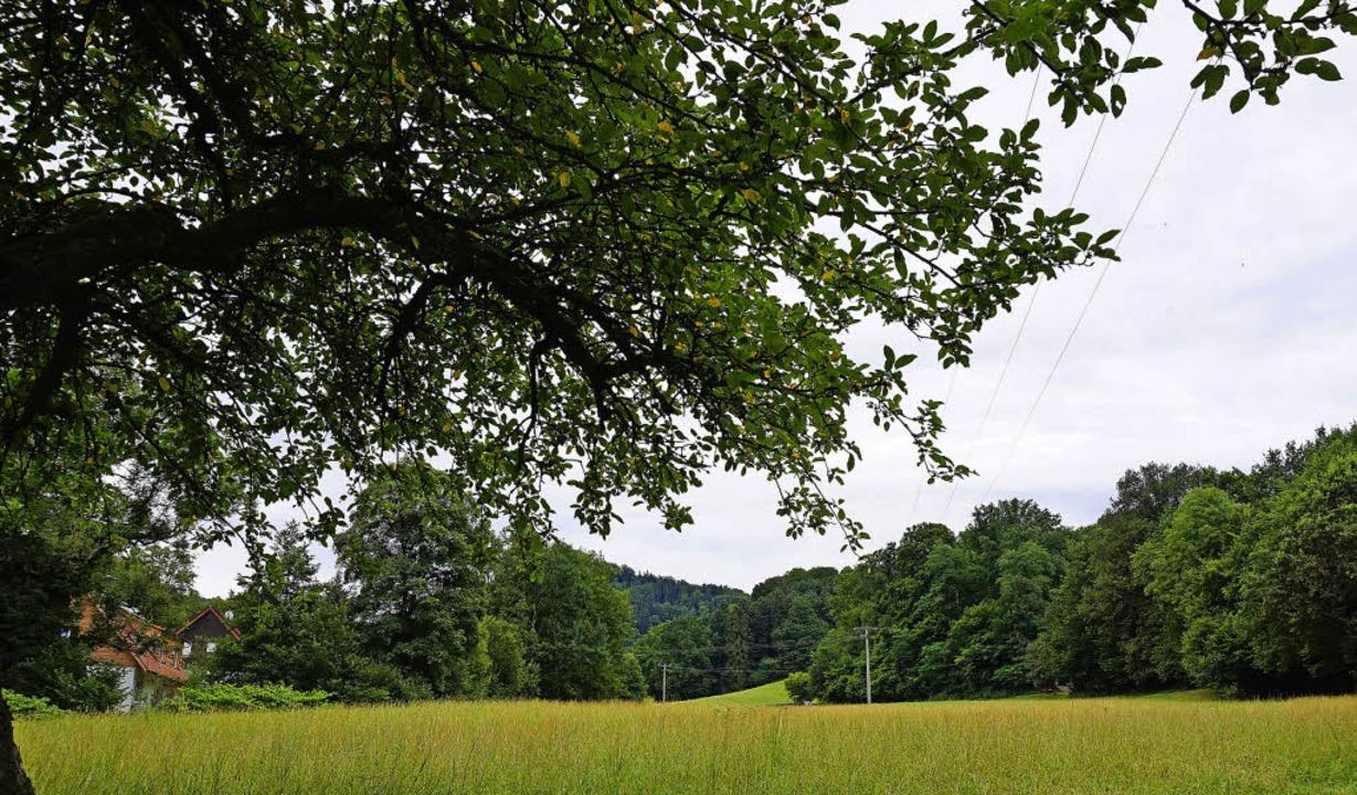 """Am Standort Selzenbach/Enge """"neu...cken entstehen -- aber reicht es aus?     Foto: Steckmeister"""