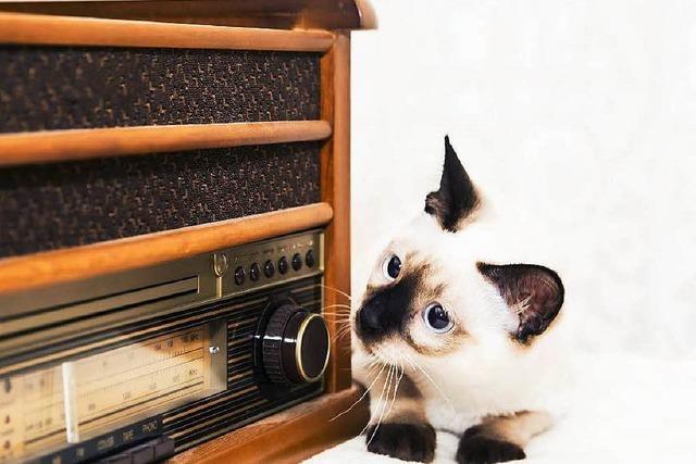 Diese Musik macht Katzen glücklich