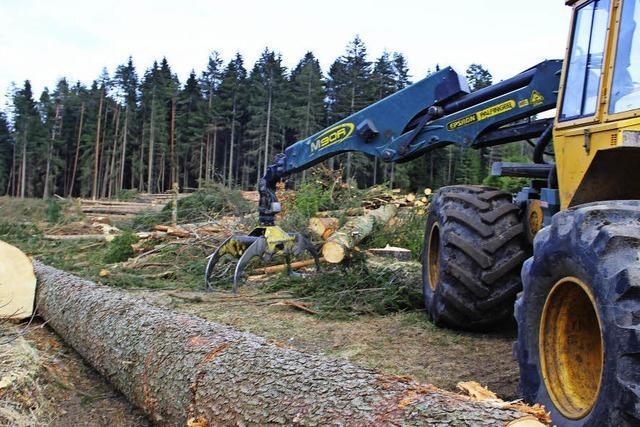 Nabu erzürnt über Abholzung