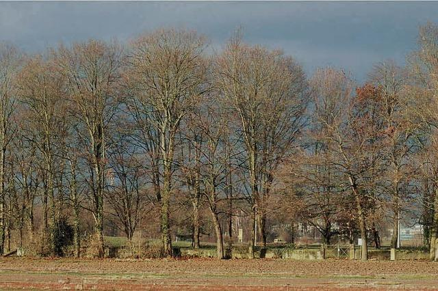 Bäume beim Friedhof behindern den Flugverkehr