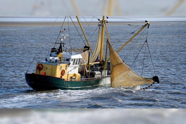 Einigung bei Fischfangquoten