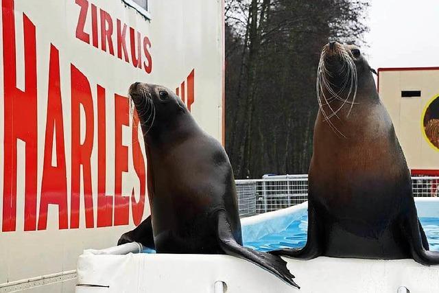 Streit um Tierrechte im Weihnachtszirkus schwelt
