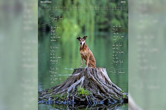 Jetzt gibt es einen Hunde-Literaturkalender aus Freiburg