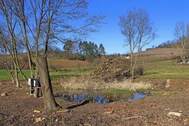Tümpel bei Fischingen freigeholzt