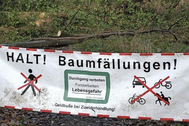 Eschen sollten in den Rheinauewäldern nicht selbständig gefällt werden