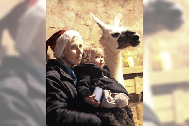 So schön ist die Stallweihnacht mit Lamas in Weitenau
